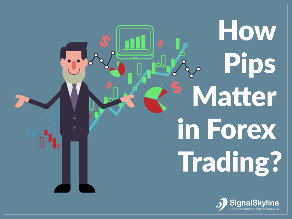 What are pips in forex